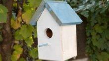 Build Bird House