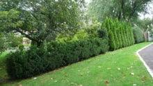 Landscaping New York Hedges Around Your Property Winged