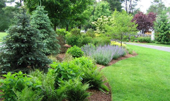 Privacy Shrub Border Landscape Design Petrowgardens Fairfield