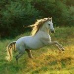 Andalusian Horses Pososibo Andalucia