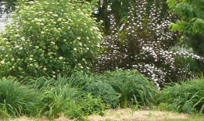 Border Design Evergreens Perennialsorganic Gardening