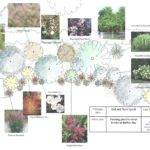 Design Shrub Border Backyard Spaces Pinterest