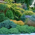 Different Kinds Evergreen Trees Shrubs Mixed Tiers
