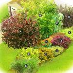 Garden Plans Shrubs Landscaping Ideas
