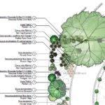 Landscape Plans Plants Symbols
