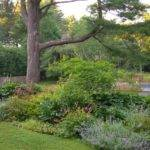 Pin Shrub Border Design Pinterest