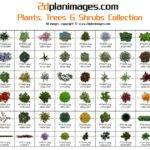 Plants Trees Shrubs Collection Brochure