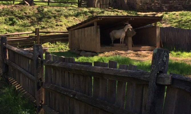 Rosemary Sampler Colonial Plantation Ridley Creek