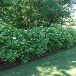 Shrub Borders Vermont Landscape Design