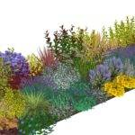 Simply Borders Plants Plans Designed Schemes Your Garden