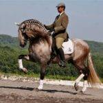 Top Andalusian Horses